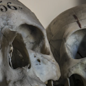 3 skulls inside an abandoned sanitarium in Italy the names are written on the heads the numbers represent their patient